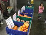 2月1日(土)に市場開放フェアを開催しました。