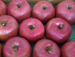 リンゴ(サンふじ)